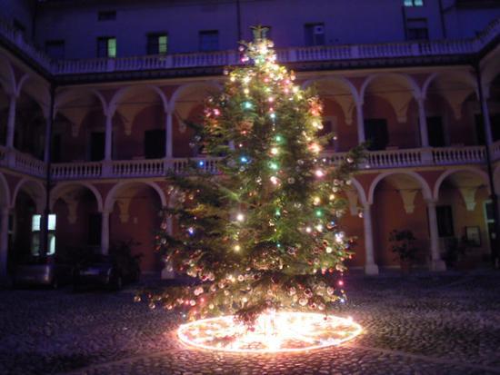 Albero di Natale 2011 - Massa (1685 clic)