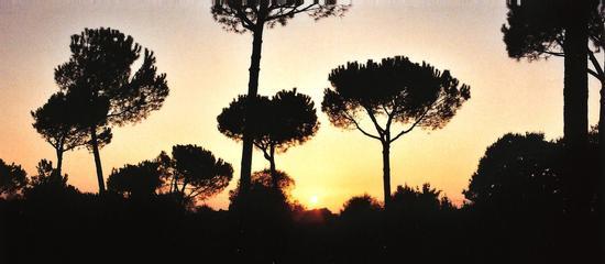 Doria - Roma (2166 clic)