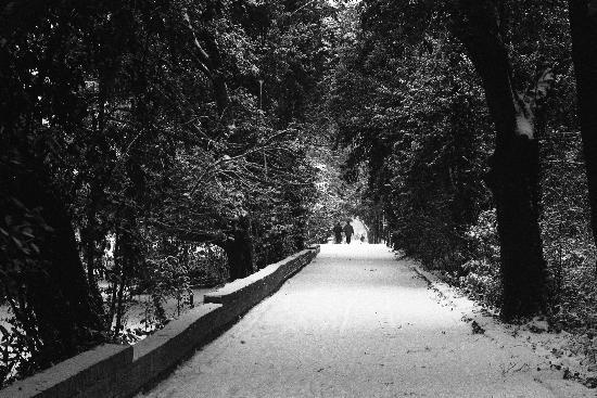 Passeggio tra la neve. (840 clic)