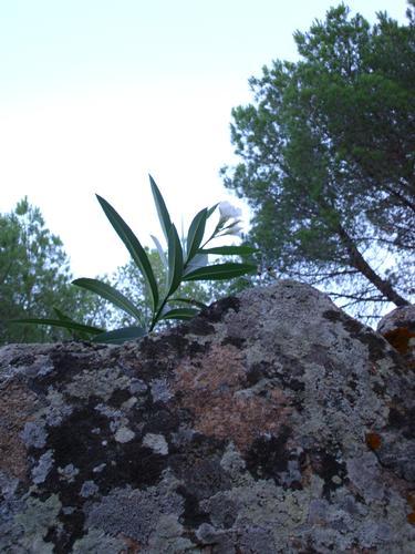 Anche da la roccia può nascere un fiore - Arbus (1997 clic)