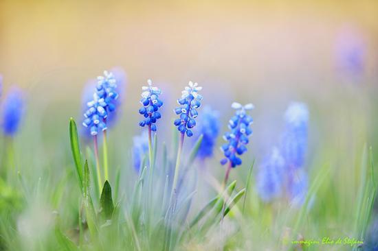 azzurro nel bosco - Lonato del garda (403 clic)