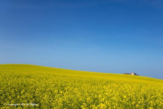 colline in giallo - Lonato del garda (574 clic)