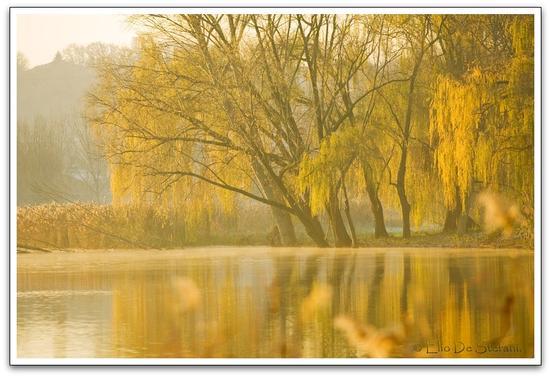 Salici in autunno - Peschiera del garda (3220 clic)