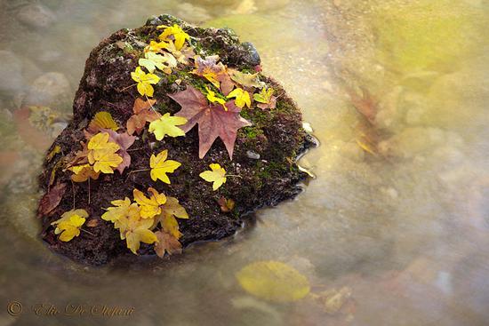 foglie gialle - Castiglione delle stiviere (1814 clic)