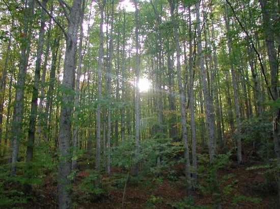 luce tra gli alberi - Sestola (5096 clic)