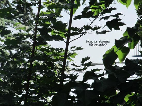 Natura -  - inserita il 25-May-12