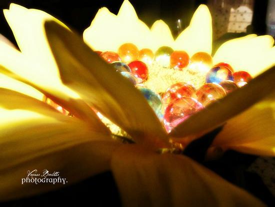 Fiore. -  - inserita il 31-Aug-11