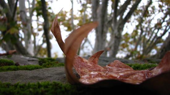 l'autunno - Gorizia (2055 clic)