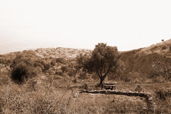 L' albero della solitudine - Nicotera (2233 clic)