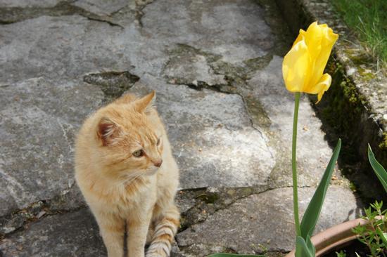 gatto - Barrea (2059 clic)