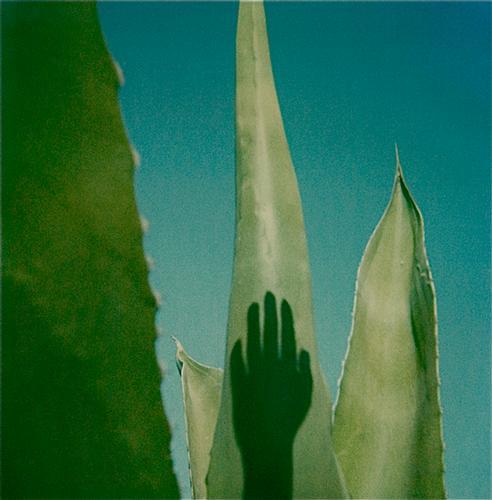 Polaroid SX 70 di Augusto De Luca -1  (459 clic)