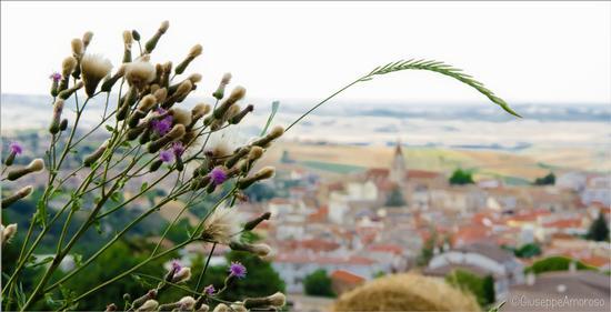 Castelnuovo della Daunia (256 clic)