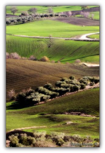 Castelnuovo della Daunia (Fg) (2828 clic)