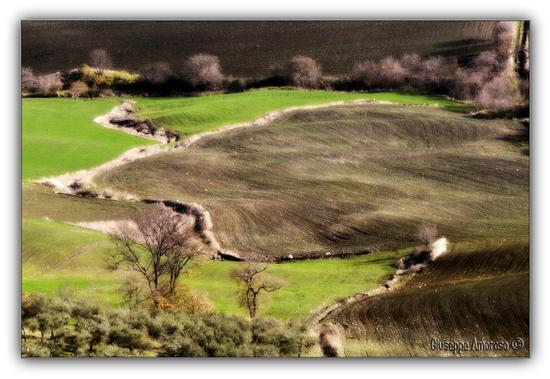Castelnuovo della Daunia (Fg) (2348 clic)
