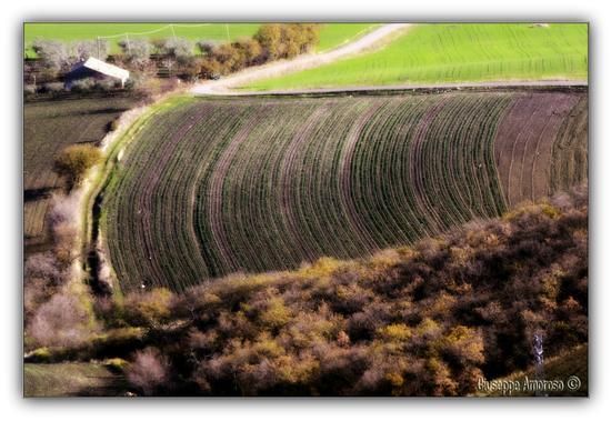 Castelnuovo della Daunia (Fg) (3876 clic)
