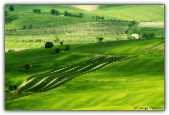 Distese agricole locali - Castelnuovo della daunia (1180 clic)