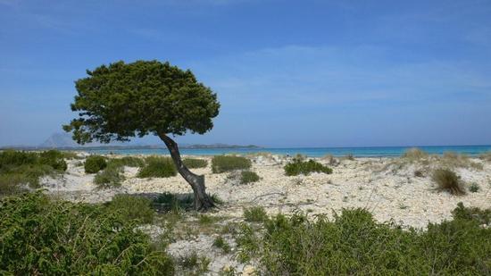 flora e fauna ...   - San teodoro (2209 clic)