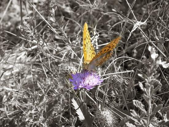 Farfalla su un fiore (1215 clic)
