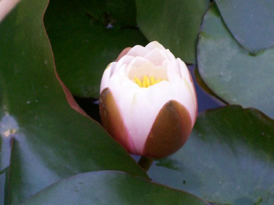 fiori esotici - Firenze (1534 clic)