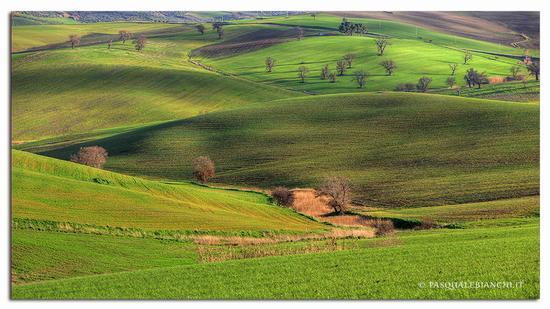 Sfumature - Guglionesi (2537 clic)
