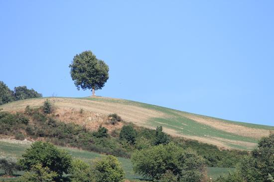 in cima alla collina - Rocca san casciano (1538 clic)