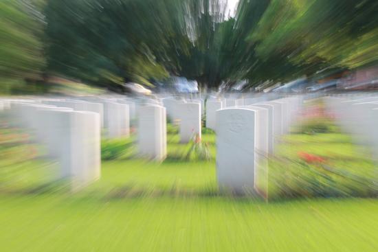 vite dissolte - Forlì (2575 clic)