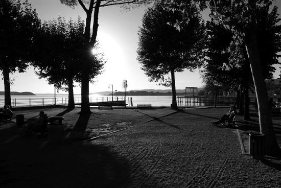 Giardini al tramonto - Passignano sul trasimeno (2089 clic)