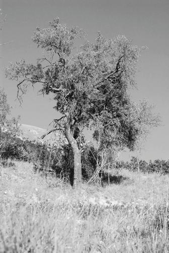 Albero - Preci (1268 clic)