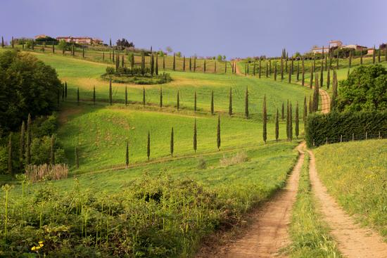 Campagna Toscana - San gimignano (6301 clic)
