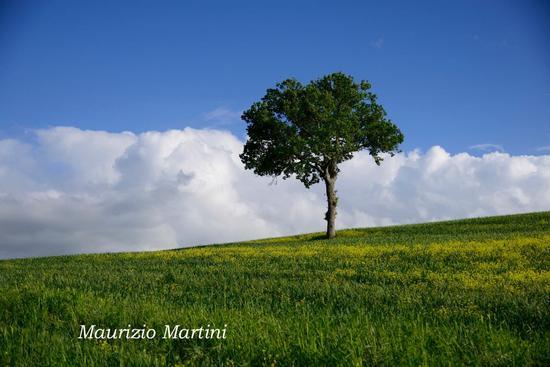 Solitario - Pienza (2574 clic)
