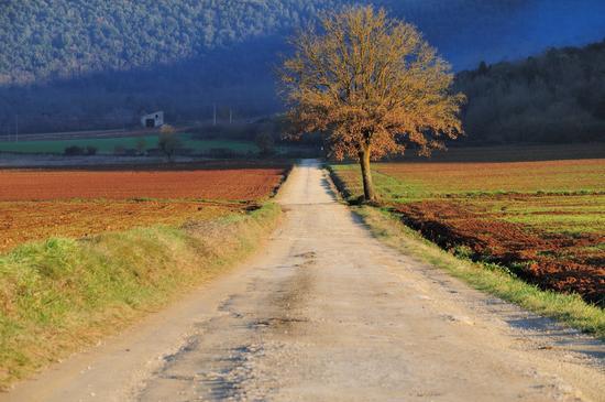 Strada Bianca - Monteriggioni (4796 clic)