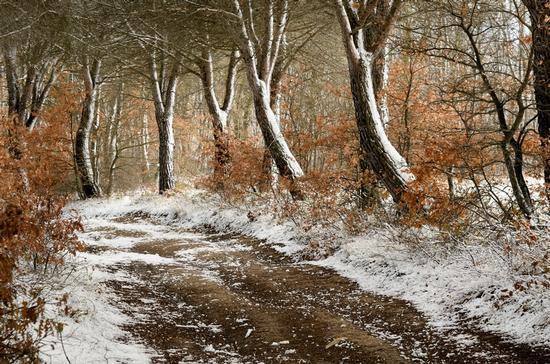 Passeggiata Invernale - Poggibonsi (4196 clic)