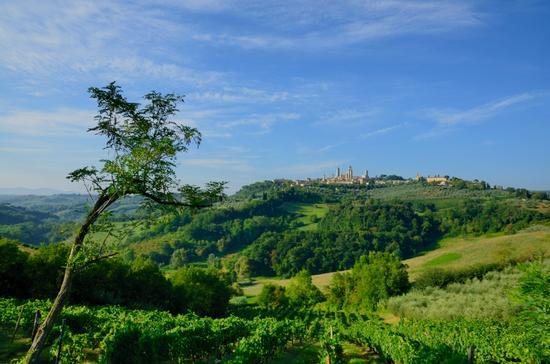Le colline di San Gimignano (3070 clic)
