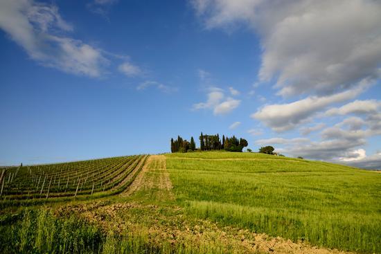 Lornano - Castellina in chianti (7193 clic)
