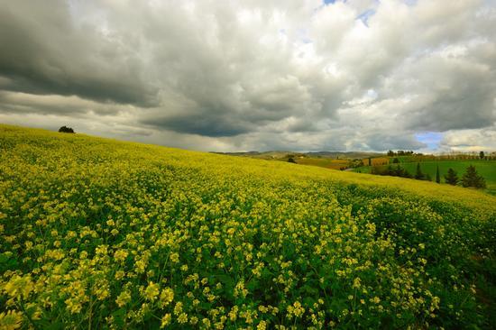 Tempesta di primavera - Castellina in chianti (4199 clic)