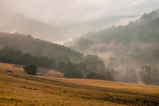 Nebbia primaverile - Poggibonsi (3540 clic)