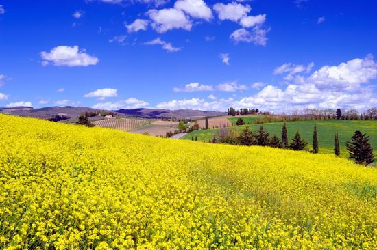Primavera - Siena (4728 clic)