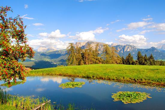 Stagno alpino - Renon (7060 clic)