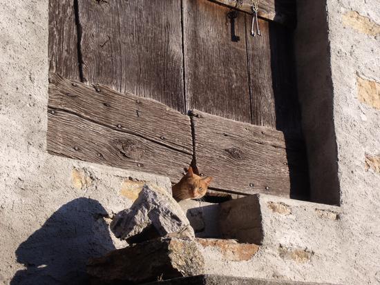 Chi va là? Questa è casa mia! :-) - Casargo (2699 clic)
