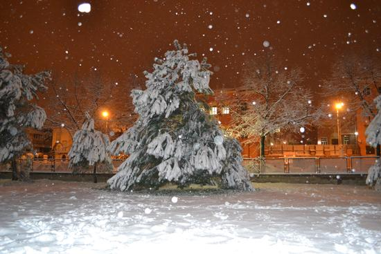nevicata a Roma 04/02/2012 (1652 clic)