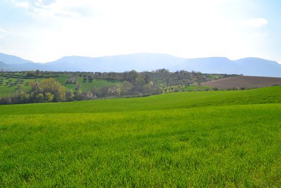 colline provincia di pescara - Catignano (1311 clic)