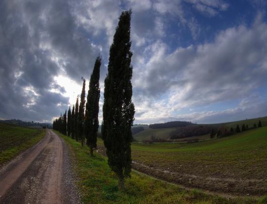 CIPRESSI DI GENNAIO - Siena (5113 clic)
