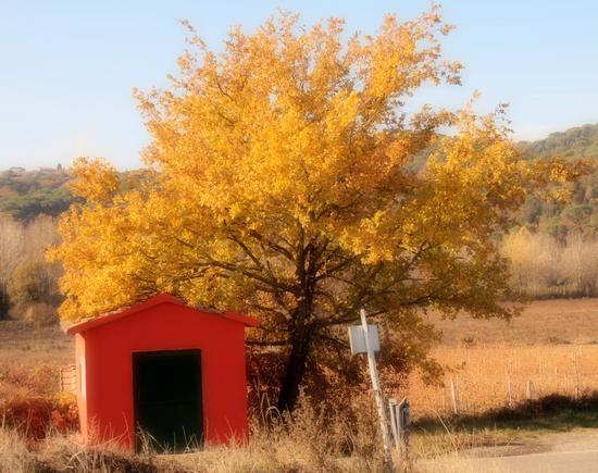 I colori dell'autunno  - Castello di brolio (2626 clic)