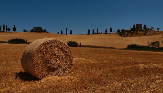 Paesaggio toscano  nel mee di  luglio - Ville di corsano (4136 clic)
