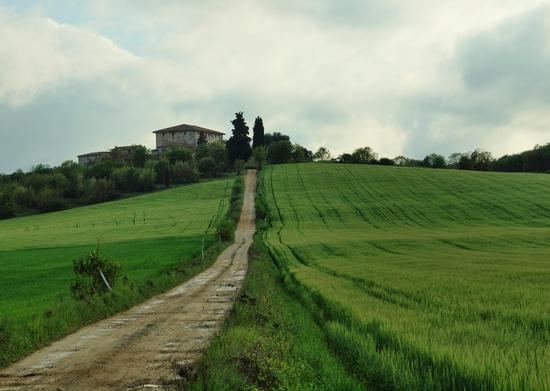 Podere sulla collina - Monteriggioni (3586 clic)