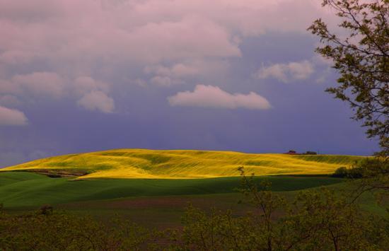 Un attimo prima del nubifragio. - Monteroni d'arbia (4103 clic)