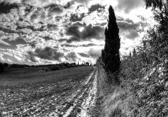 paesaggio toscano in bianco e nero  - Murlo (5637 clic)
