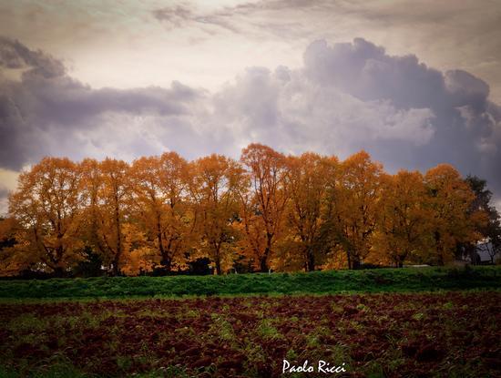 Giallo - verde  - Sovicille (5043 clic)