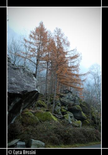Larici in autunno - Val masino (1001 clic)