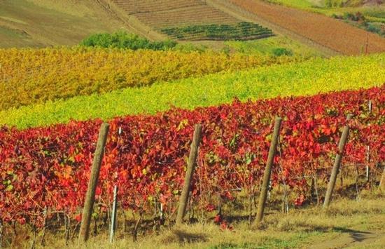Autunno in Toscana - Certaldo (2606 clic)